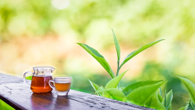 Água de chá em potes de vidro sobre a mesa de madeira e plantações de folhas de chá desfocam o fundo do bokeh