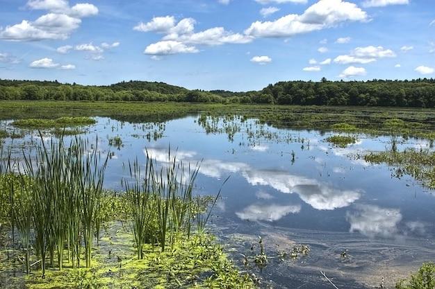 Água do lago natureza lagoa massachusetts