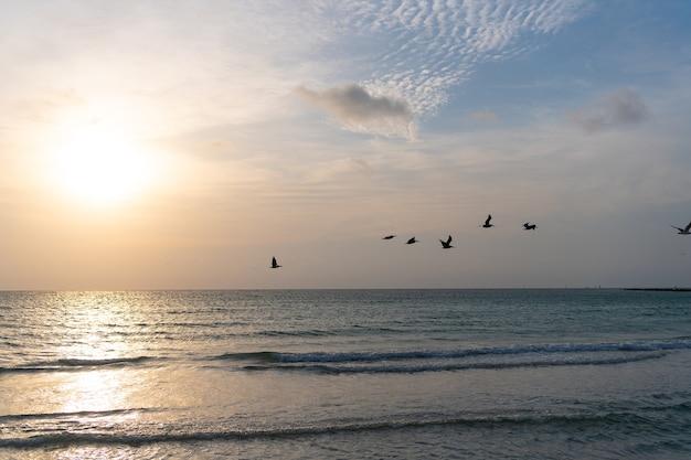 Água do oceano com céu pôr do sol e silhuetas de gaivota. amanhecer dourado da vista do mar sobre o mar. conceito de natureza. belo crepúsculo. praia de miami. de manhã cedo, nascer do sol sobre o mar.