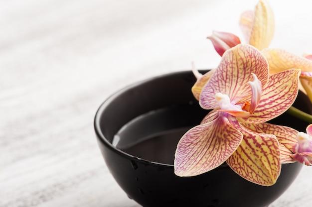 Água e orquídea laranja vermelha