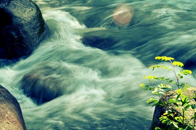 Água fluindo da cachoeira e pequena planta verde frsh natureza fundo