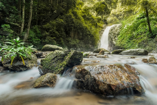 Água macia do fluxo no parque natural, bela cachoeira na floresta tropical