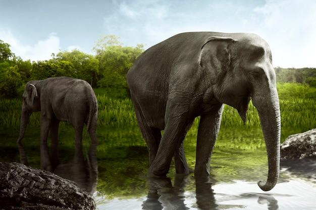 Água potável de elefante de sumatra