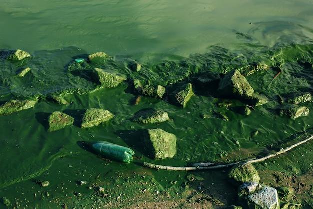 Água suja do rio com garrafa de lixo de plástico e flores de algas