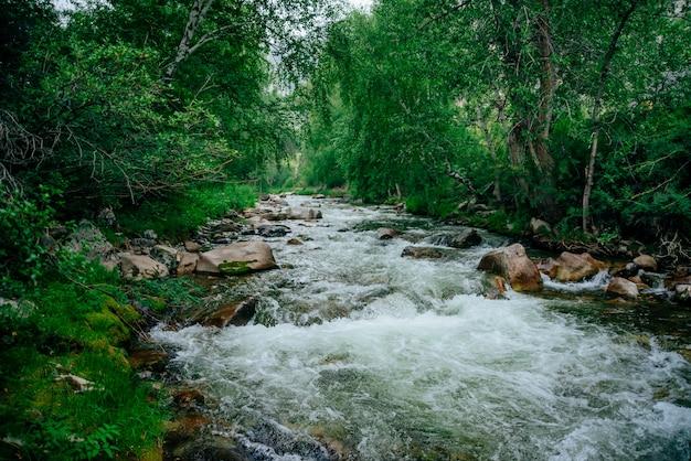 Água verde no riacho da montanha na floresta