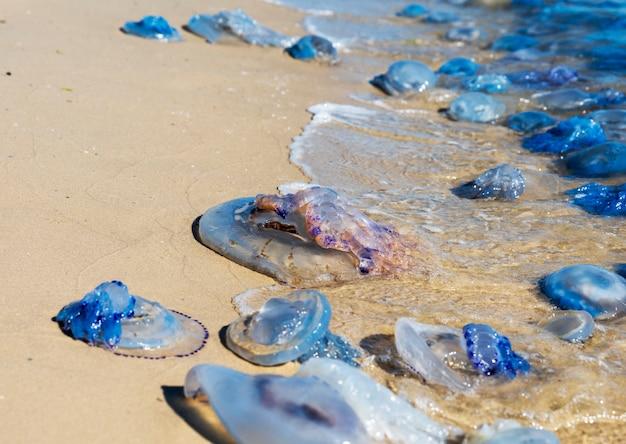 Água-viva morta e viva na costa do mar negro