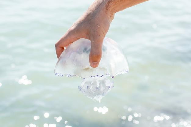 Água-viva na mão