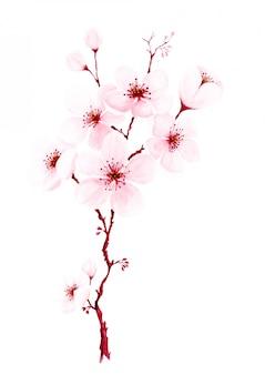 Aguarela pintada à mão ramos de flor de cerejeira.