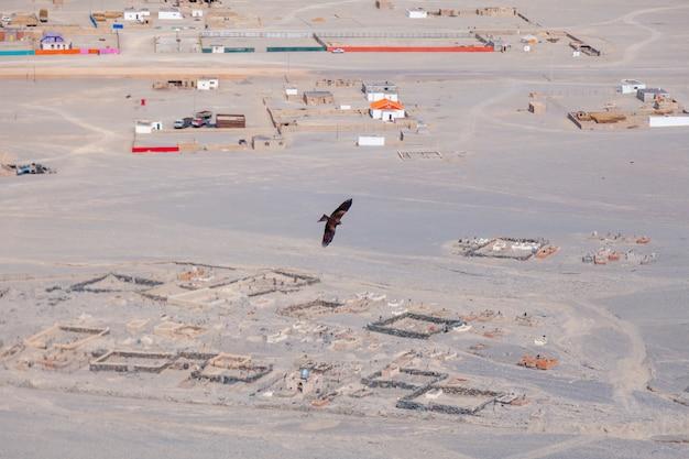 Águia americana marrom em voo