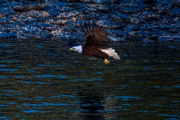 Águia-careca americana em voo sobre o oceano no alasca com rocky shoreline