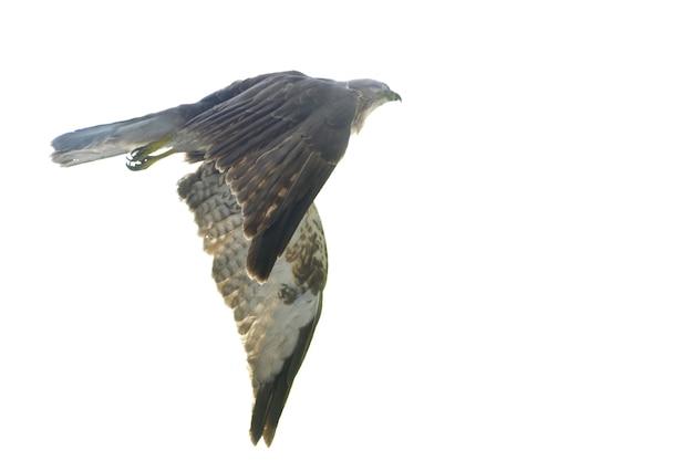 Águia do vôo