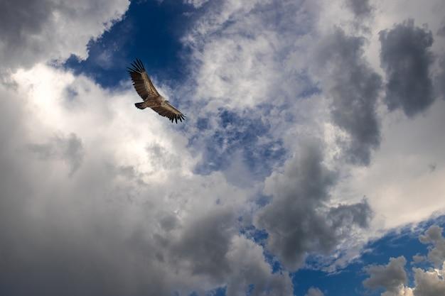 Águia voando em céu nublado