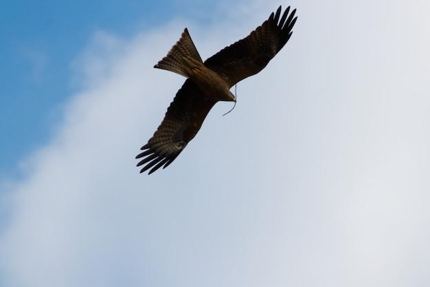 Águia voando sobre o céu