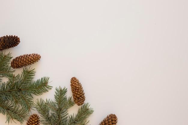 Agulhas de pinheiro e cones de coníferas copiam o espaço