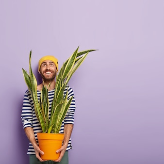 Ainda bem que o homem alegre olha para cima com um sorriso dentuço, vestido com roupas casuais, segura um vaso com planta sansevieria, vai replantar, usa chapéu amarelo, tem restolho, posa sobre fundo roxo, espaço em branco