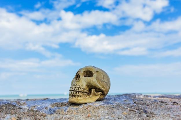 Ainda vida com um crânio