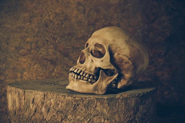 Ainda vida com um crânio.