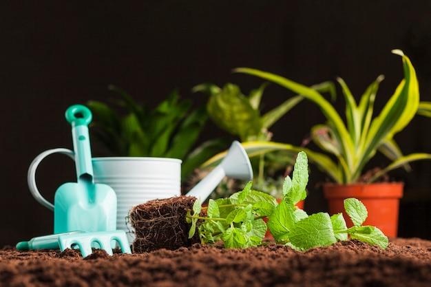 Ainda vida de várias plantas no solo