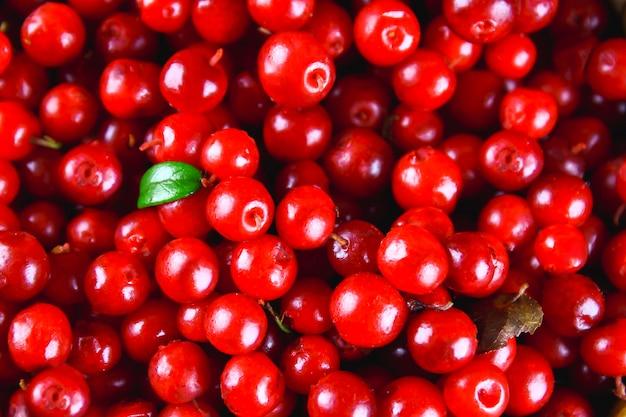 Airela, foxberry, cranberry, vista superior de textura de lingonberry.