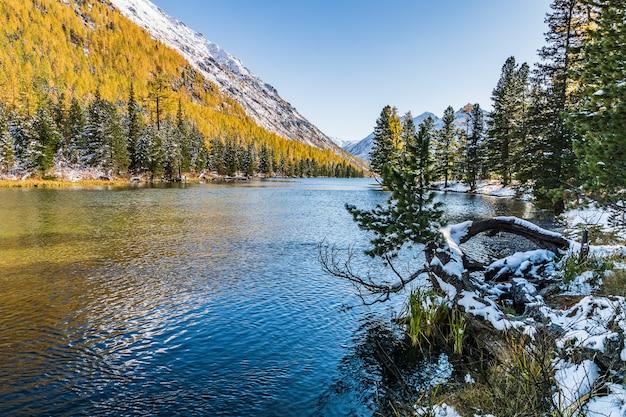 Ajardine com o rio em montanhas de altai, rússia.
