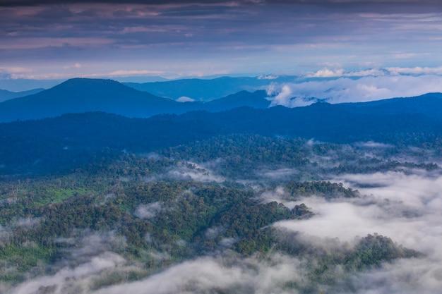 Ajardine o mar da névoa na montanha alta na província de phitsanulok, tailândia.