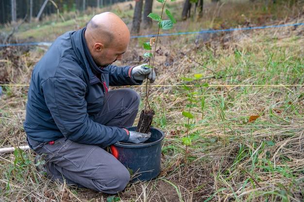 Ajudando a floresta após um desastre ecológico plantando árvores jovens