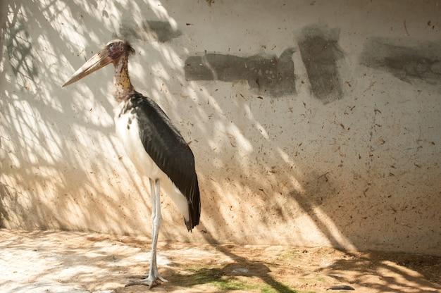 Ajudante menor ave na tailândia