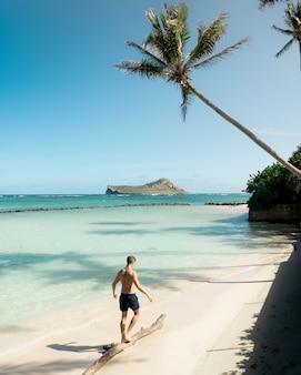 Ajuste o macho sem camisa na praia, cambaleando em uma prancha de madeira com incríveis árvores e céu