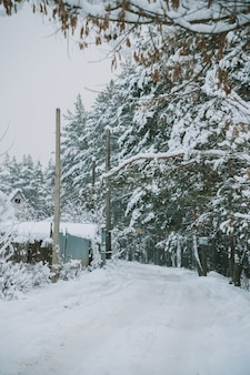 Aldeia russa coberta de neve perto da floresta