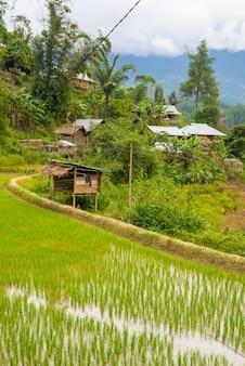 Aldeia tradicional de toraja na idílica paisagem rural