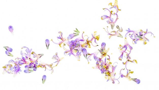 Alecrim fresco e folhas verdes com delicadas flores roxas. isolado no fundo branco