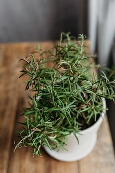 Alecrim fresco exuberante em uma panela na mesa da cozinha.