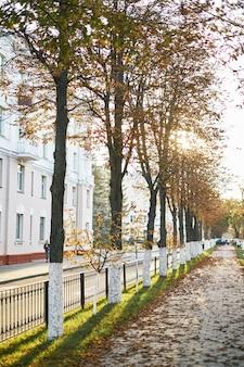 Aleia do parque do outono na névoa com árvores e as folhas caídas alaranjadas. aleia nevoenta do outono no parque.