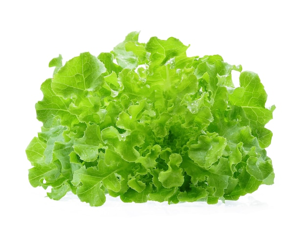 Alface de carvalho verde com gotas de água isoladas no fundo branco.