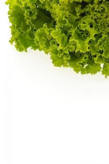 Alface verde