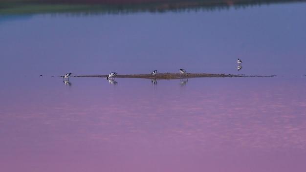 Alfaiate ao amanhecer sobre uma lagoa de sal