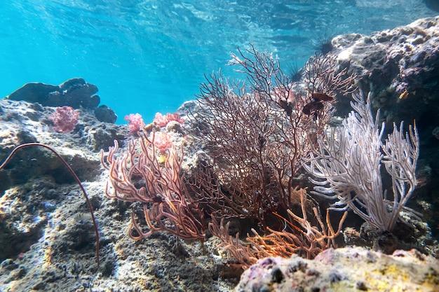 Algas coralinas e corel na ilha cockburn, myanmar