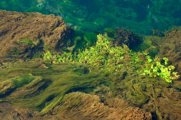 Algas e outras vegetações flutuando na água