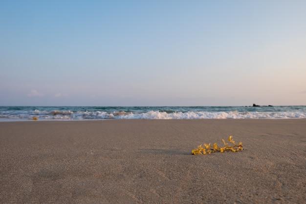Algas marinhas na praia