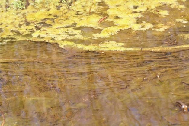 Algas verdes e alaranjadas no rio, poluição do meio ambiente.