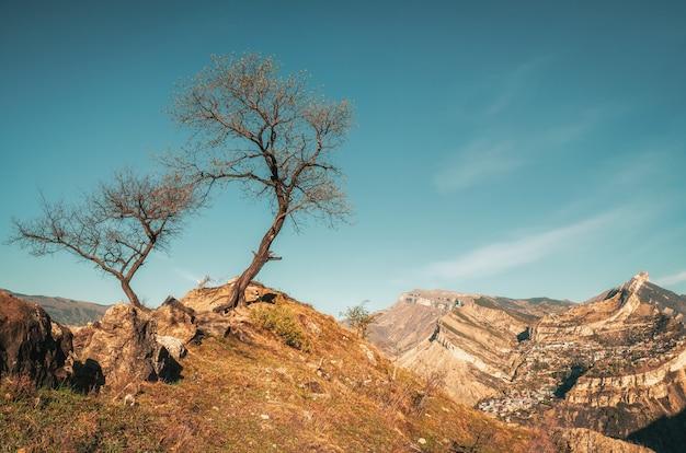 Algumas árvores secas perto do penhasco.