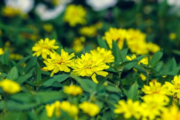 Algumas flores amarelas