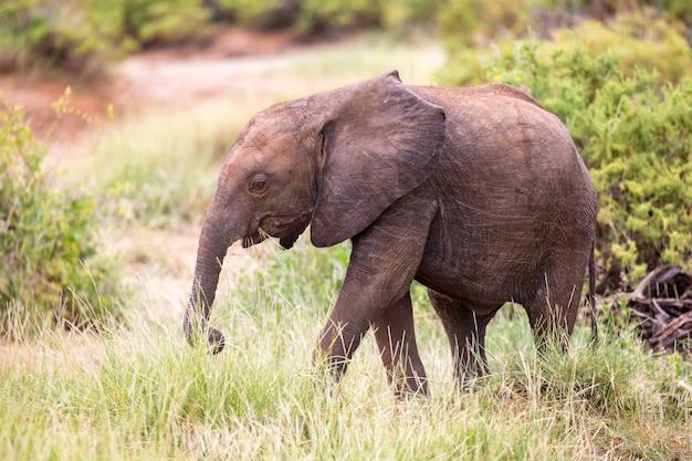 Alguns elefantes caminham entre as árvores e arbustos