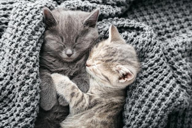 Alguns gatinhos malhados fofos apaixonados dormindo beijando no cobertor de malha cinza macio. gatos descansam cochilando na cama. amor e amizade felinos no dia dos namorados. animais de estimação confortáveis dormem em uma casa aconchegante. vista do topo.