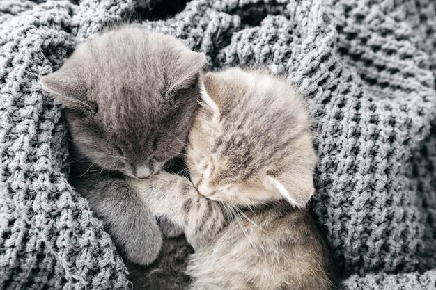 Alguns gatinhos malhados fofos dormindo beijando no cobertor de malha cinza macio. gatos descansam cochilando na cama. amor e amizade felinos no dia dos namorados. animais de estimação confortáveis dormem em uma casa aconchegante. vista do topo.