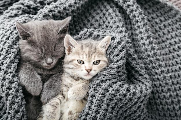 Alguns gatinhos malhados fofos dormindo no cobertor cinza de malha macia. gatos descansam cochilando na cama. amor e amizade felinos no dia dos namorados. animais de estimação confortáveis dormem em uma casa aconchegante. copie o espaço.