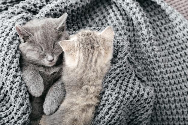 Alguns gatinhos malhados fofos dormindo no cobertor cinza de malha macia. gatos descansam cochilando na cama. amor e amizade felinos no dia dos namorados. animais de estimação confortáveis dormem em uma casa aconchegante