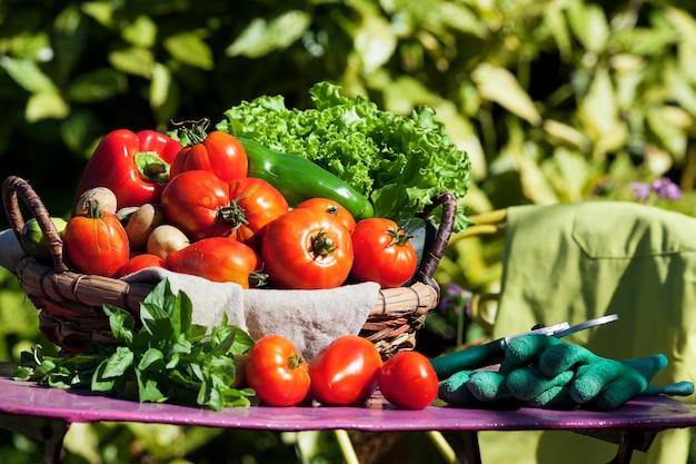 Alguns vegetais em uma cesta sob a luz do sol