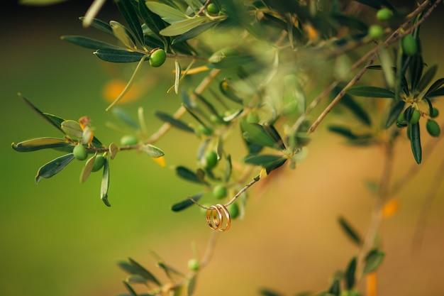 Alianças de casamento em um fio na oliveira