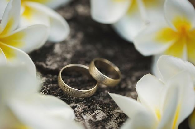 Alianças de casamento na casca de uma árvore. flores plumeria.